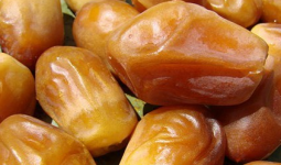 Zahedi date up to 5000 tons per month